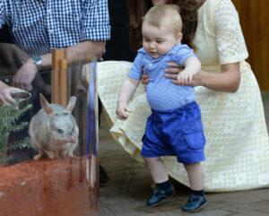 Prince George Sees Bilby Sydney Zoo