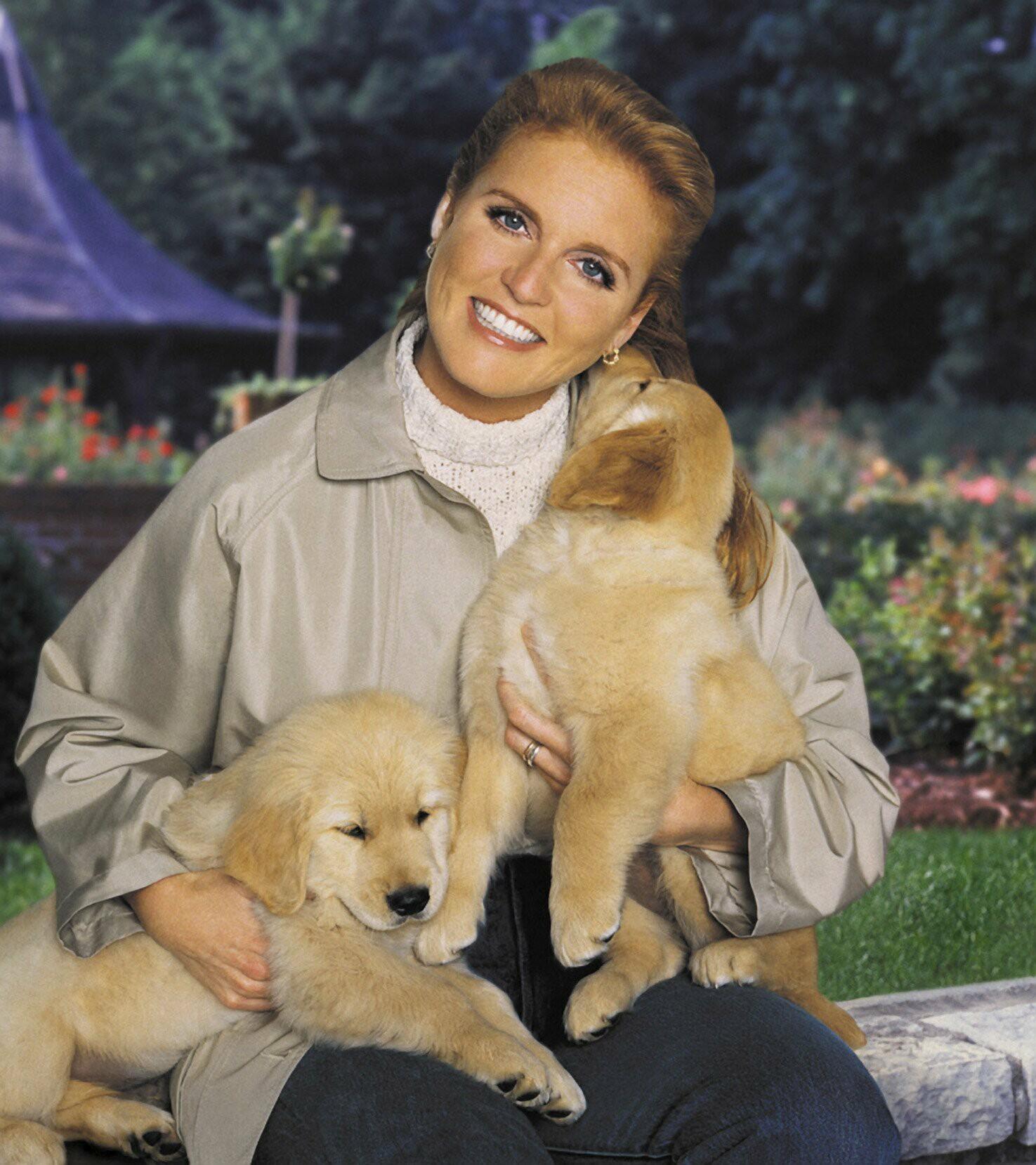 Fergie Khaki Jacket Holds Golden Retriever Pupples