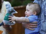 Prince George Blue Shirt Holds Toy Bilby 2014 Taronga Zoo