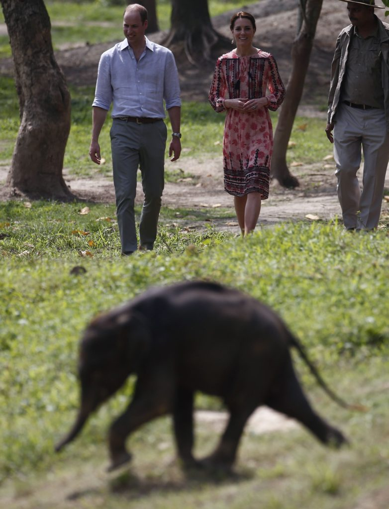 prince william kate middleton walk toward baby elephant