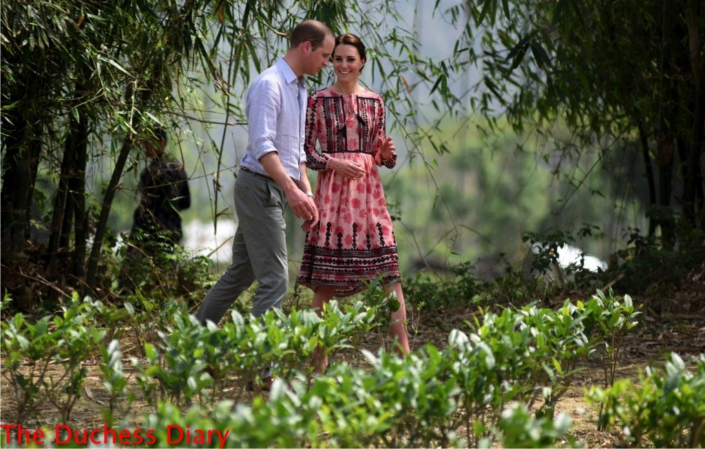 prince william kate middleton walk through village tea garden kaziranga india