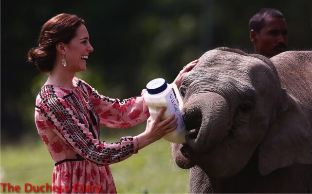 kate middleton laughs feeds baby elephant kaziranga