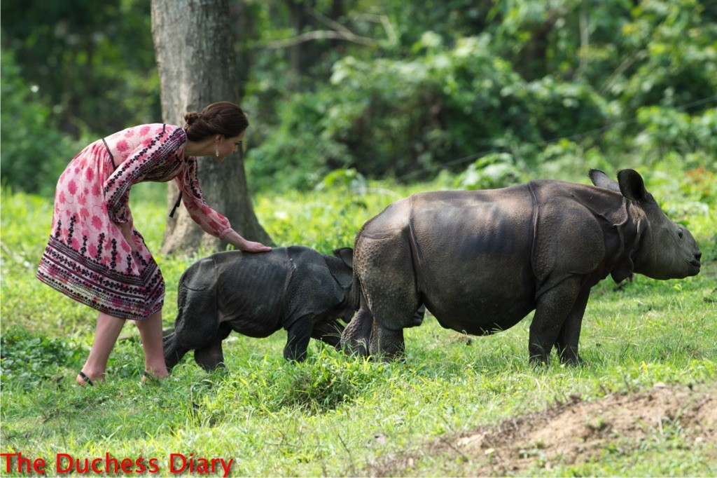 kate middleton topshop dress pets rhino kaziranga national park