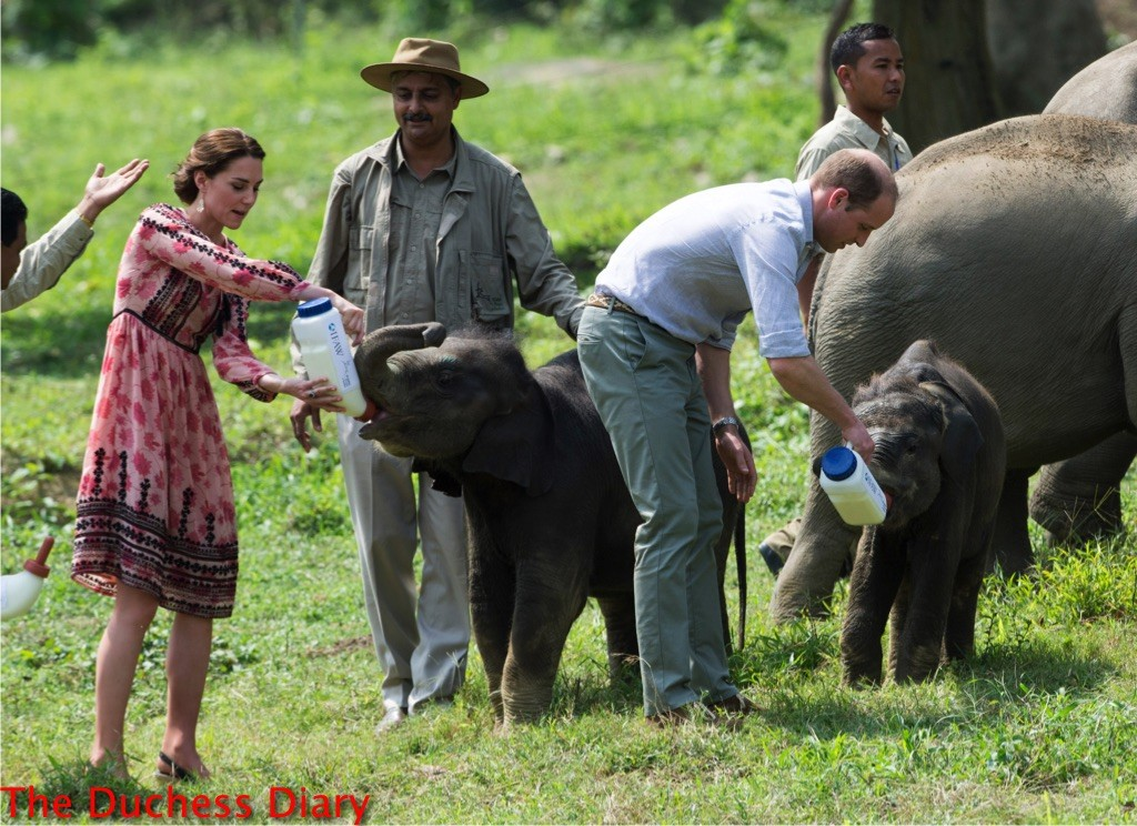 prince william kate middleton feed baby elephants kaziranga national park