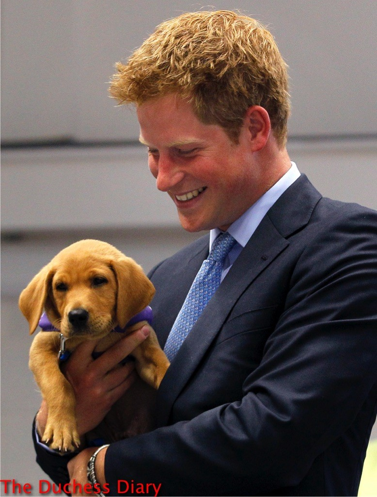 prince harry holds puppy veyron canine partners training