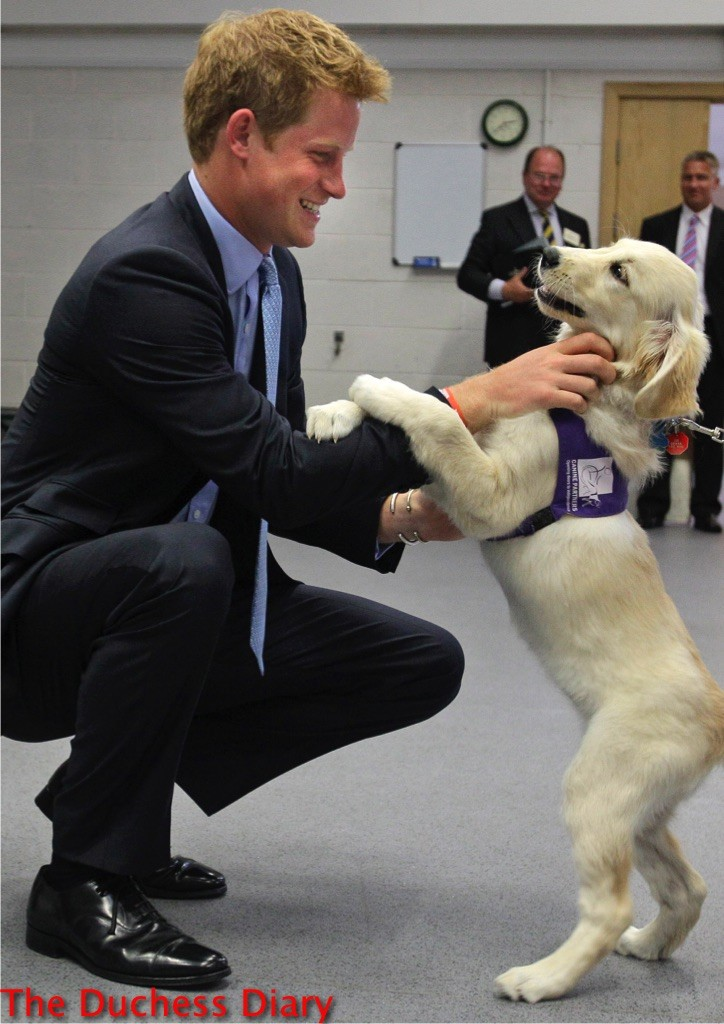prince harry pets trudy golden retriever puppy canine partners training
