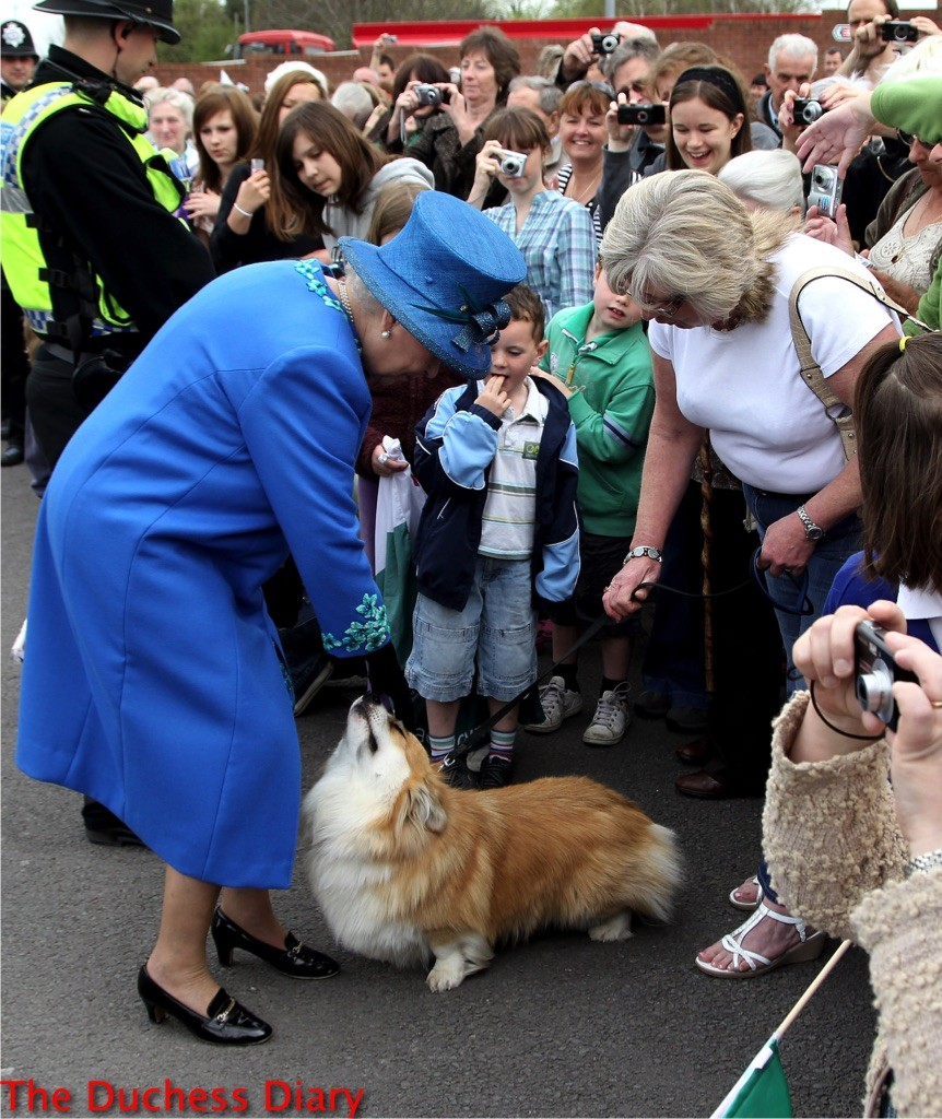 queen elizabeth II blue outfit pets corgi wales 2010