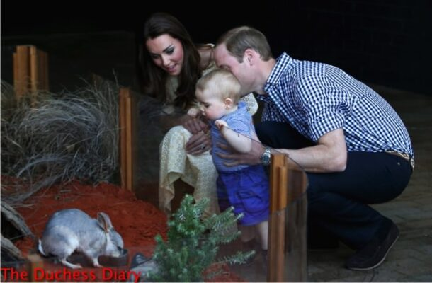 prince george looks bilby taronga zoo prince william duchess cambridge